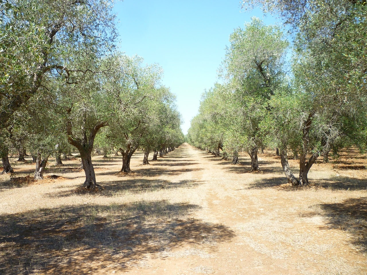 Orchards Near Me