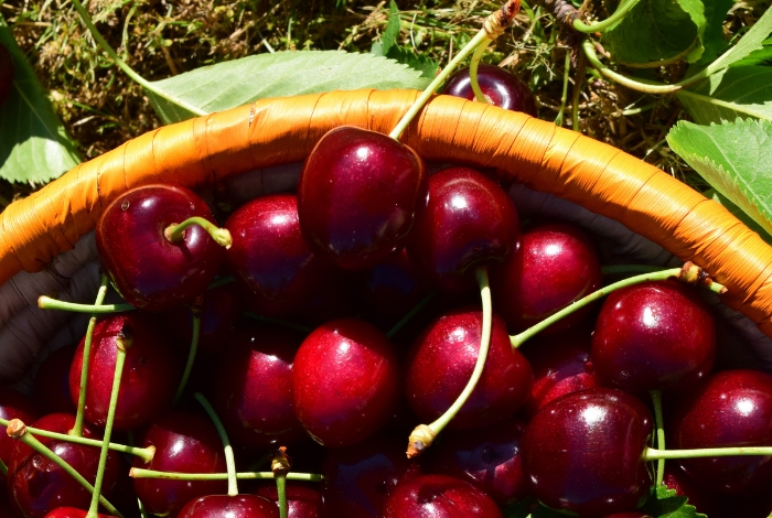the-cherry-route-portugal-orchards-near-me