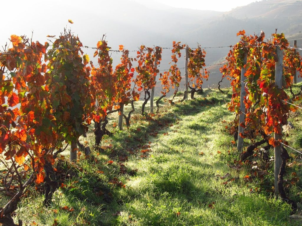 vineyards-douro-valley-orchards-near-me