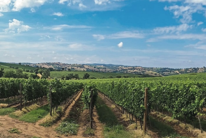 wine-tasting-experience-tuscany-day-tour-orchards-near-me