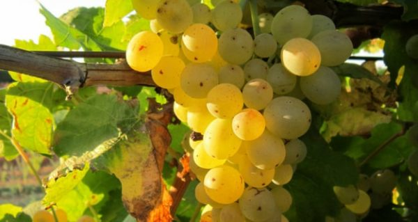 wine-tour-portugal-douro-valley-day-tour-orchards-near-me