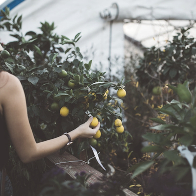 orchards-near-me-about-us-fruit-picking-go-to-grow