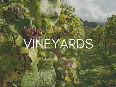 vineyard-tours-orchards-near-me