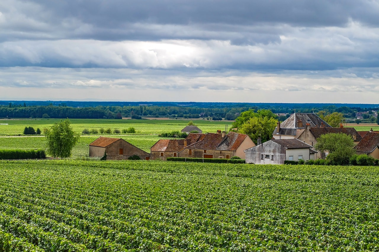 wine-and-dine-experience-burgundy-france-orchards-near-me