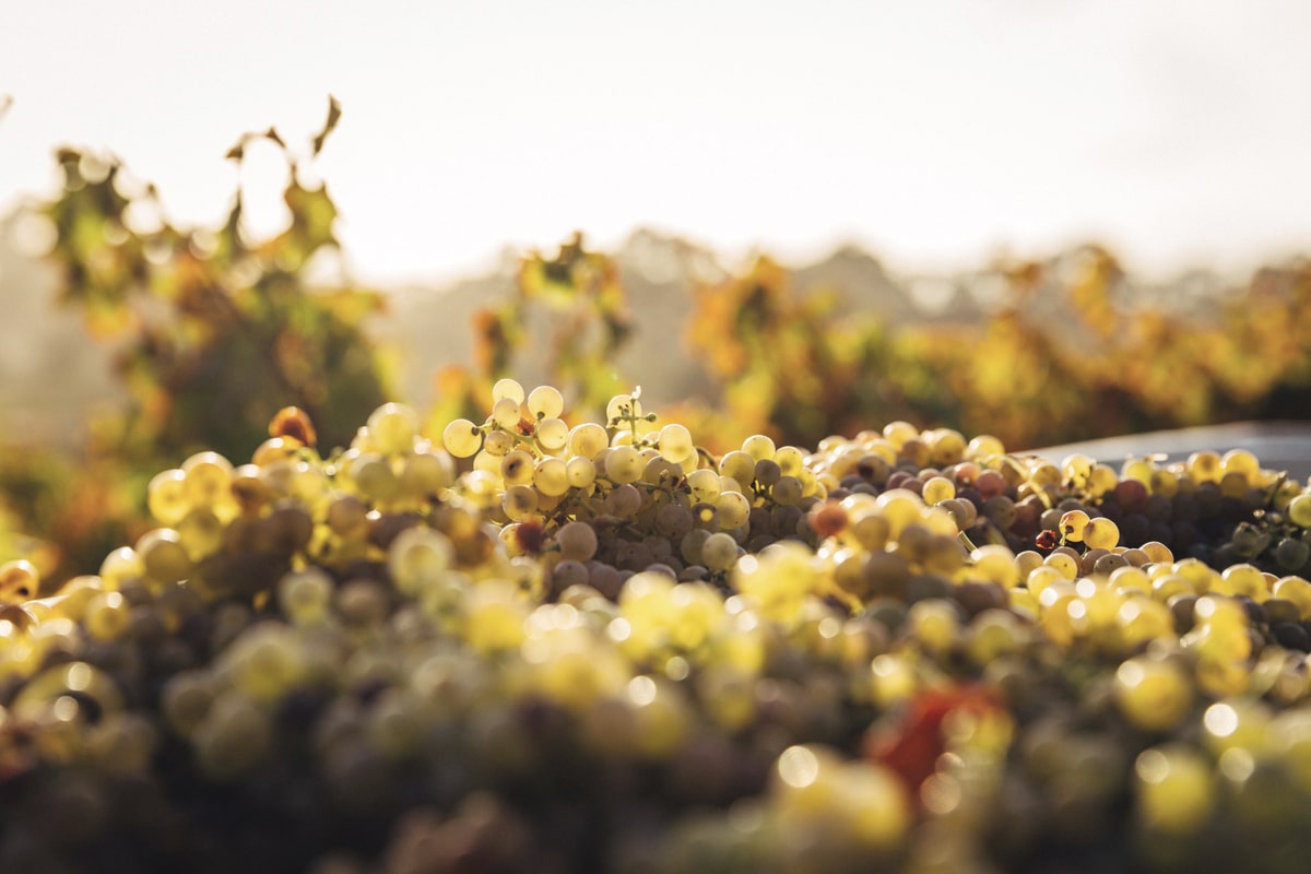 wine-harvest-tours-orchards-near-me
