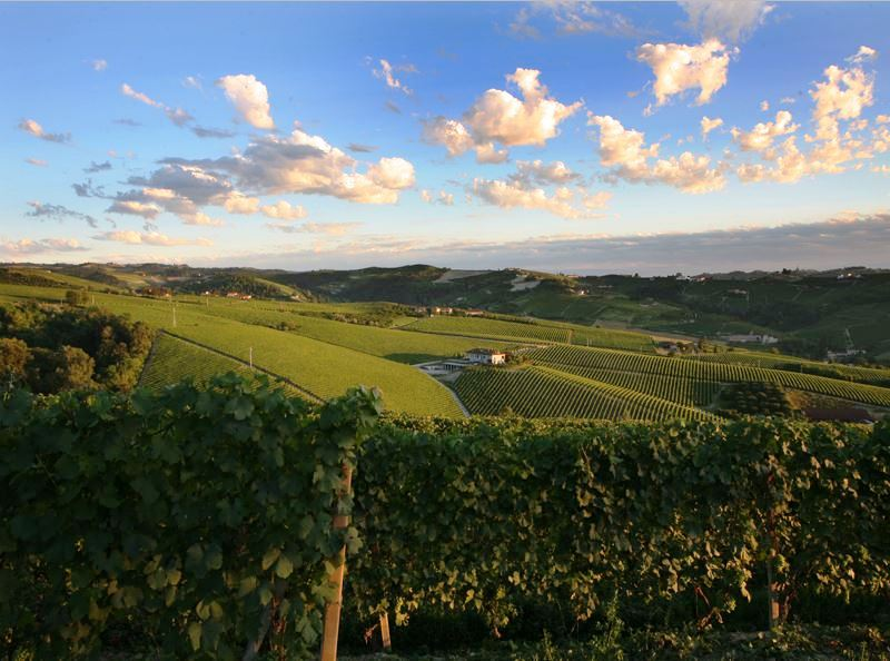 Barbaresco-vineyards-italy-adventure-luxury-truffles-and-wine-adventure-italy