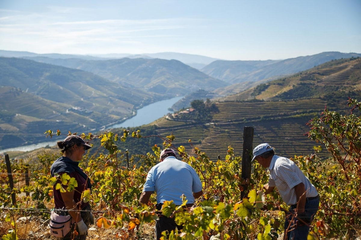 vineyard-tour-douro-valley-portugal