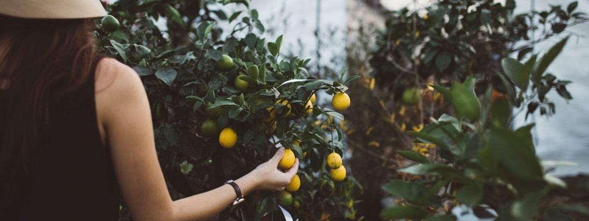 reasons-why-we-love-fruit-picking