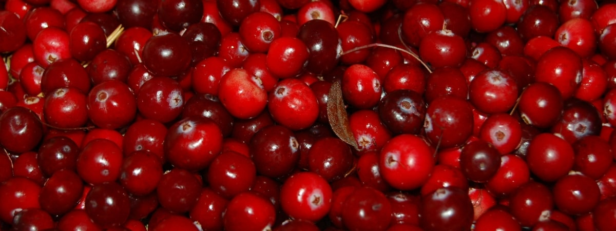 unique-ways-to-use-cranberries-at-christmas-time