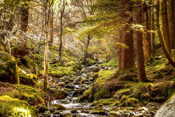 wicklow-forest-walk-foraging-weekend-ireland-orchards-near-me