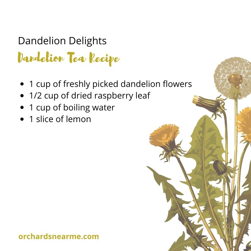 dandelion-tea-recipe