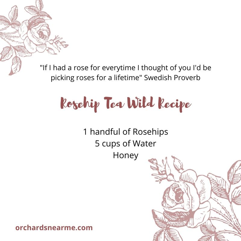 rosehip-tea-recipe