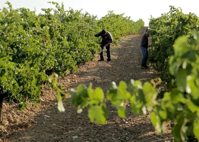 harvest-time-spain-quatro-rayas-la-seca-wine-tour