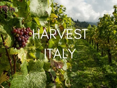 harvest-tours-italy-orchards-near-me