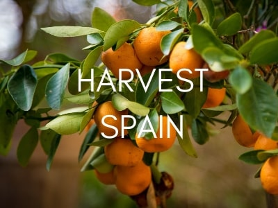 harvest-tours-spain-orchards-near-me