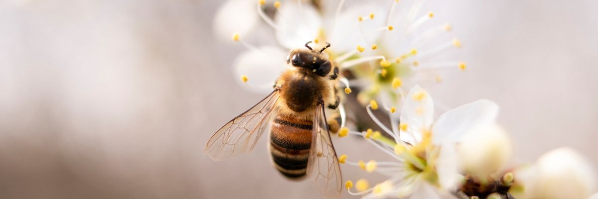 6-ways-you-can-help-to-save-the-bees-orchards-near-me