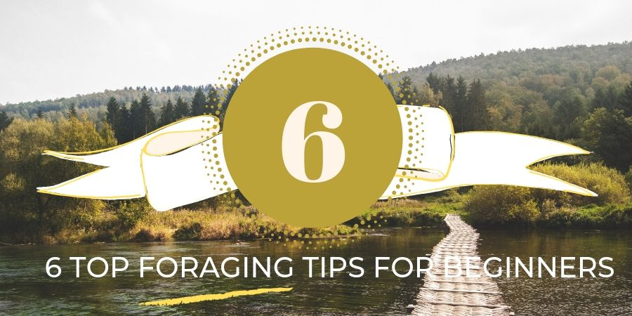 foraging-tips-for-beginners-orchards-near-me