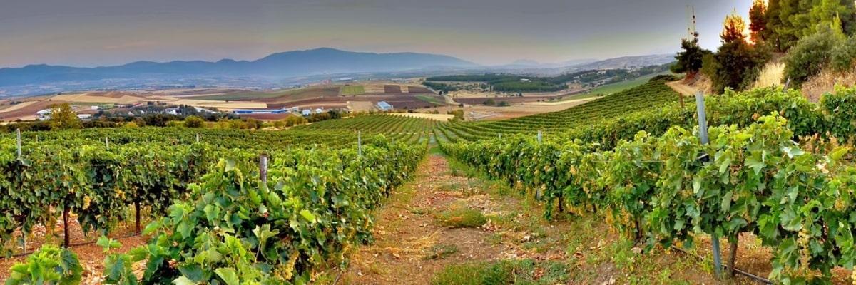 four-amazing-european-wine-tours-orchards-near-me
