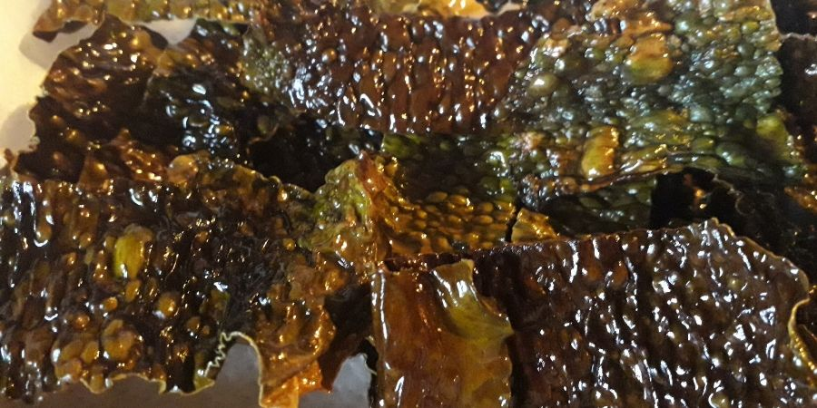 sugar-kelp-foraging-seaweed-recipe-orchards-near-me