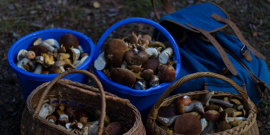 guided-food-tours-mushroom-foraging-europe-orchards-near-me