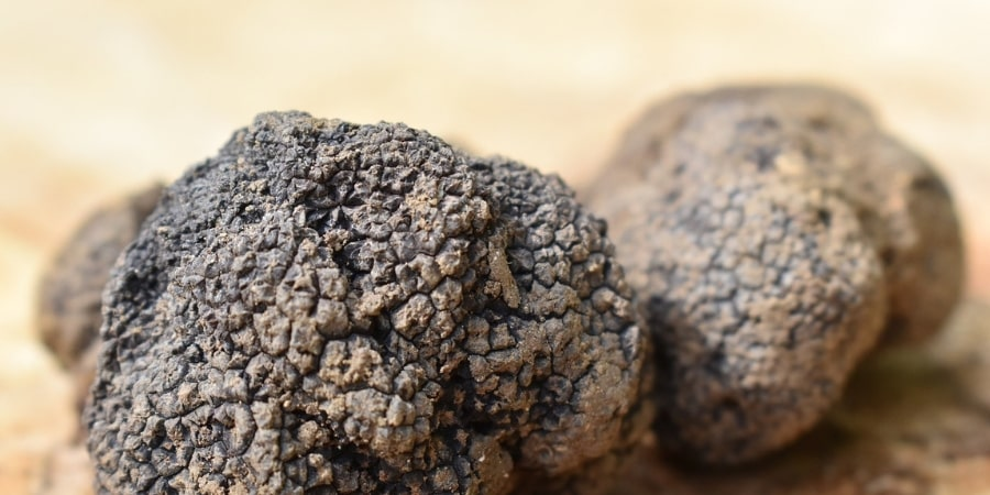 truffle-hunting-tours-orchards-near-me