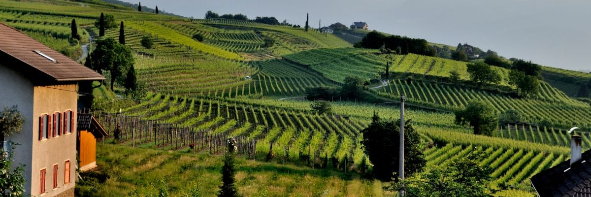 wine-tasting-for-beginners-european-wine-orchards-near-me