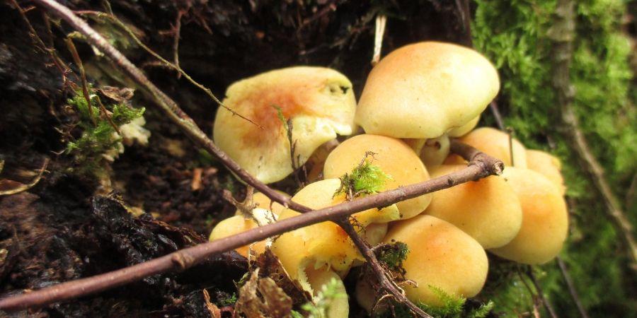 finding-wild-mushrooms-ireland-orchards-near-me