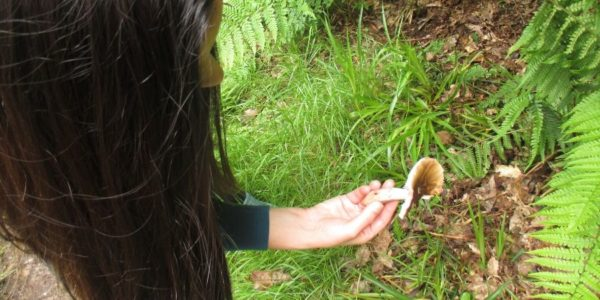foraging-experience-wicklow-mushroom-picking