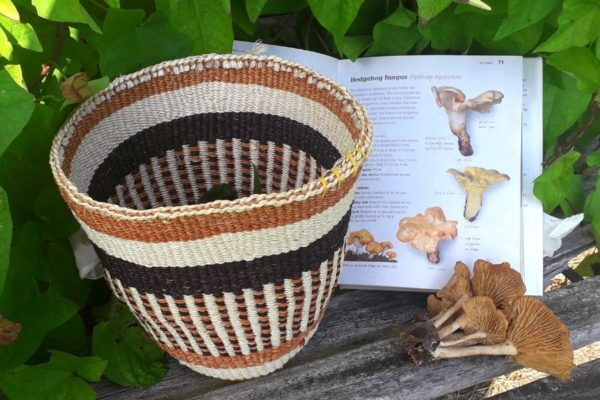 foraging-basket-orchards-near-me