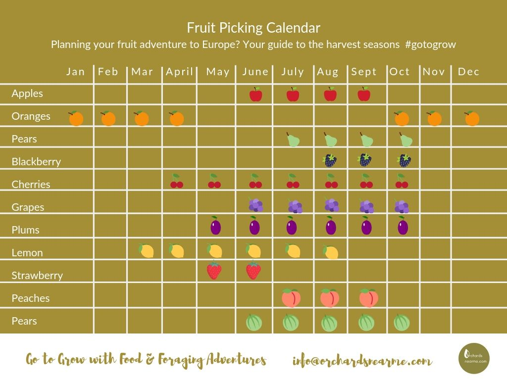 fruit-picking-calendar-europe-orchards-near-me