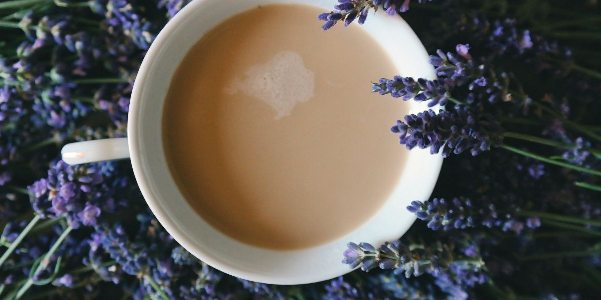 lavender-tea-wild-plants-insomnia-orchards-near-me