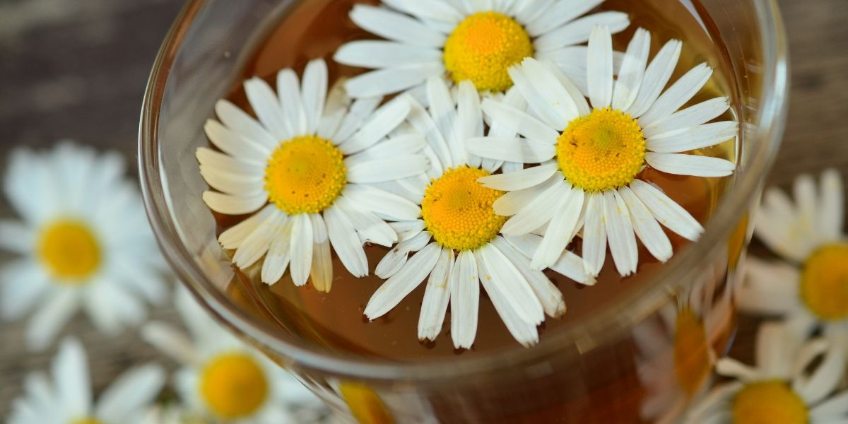 Chamomile Archives Orchards Near Me