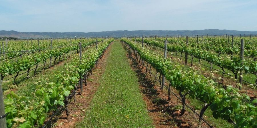 alentejo-wine-experience-portugal-orchards-near-me