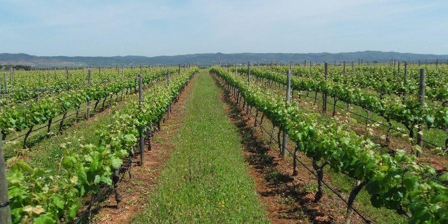 alentejo-wine-experience-portugal-orchards-near-me