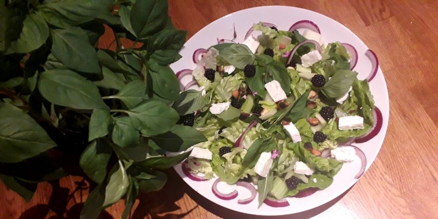 blackberry-and-basil-salad-with-feta-cheese-foraging-orchards-near-me