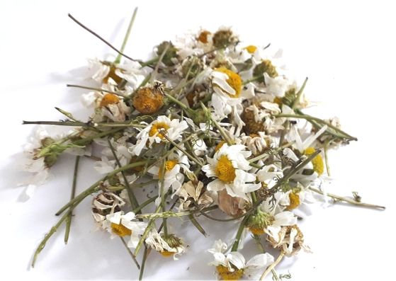 dried-oxeye-daisies-wild-herbs