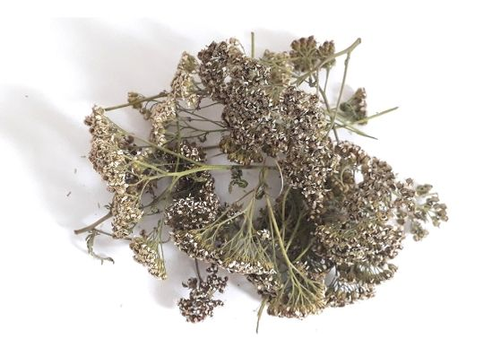 dried-yarrow-plant-herb-orchards-near-me