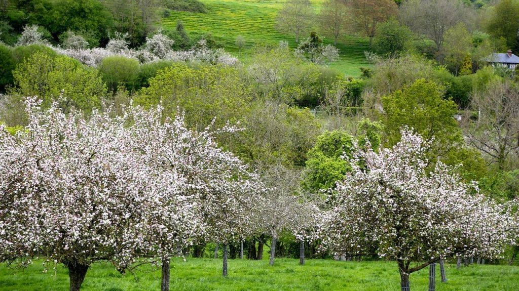 rural-wellness-retreat-normandy-fruit-trail-france-orchards-near-me