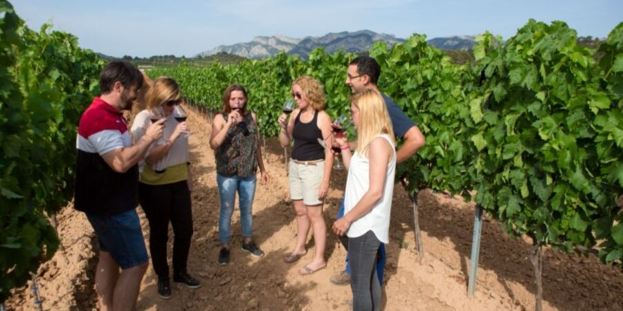 vineyard-catalonia-wine-tasting-terra-alta-spain