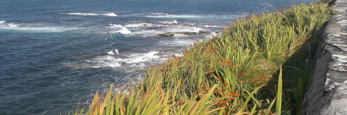 wild-edible-plants-by-the-sea-foraging-orchards-near-me