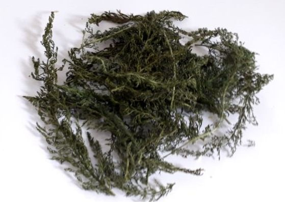 dried-yarrow-leaves-herbs-orchards-near-me
