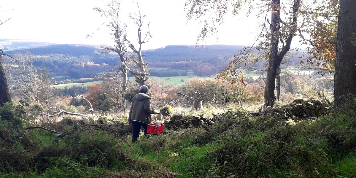 foraging-in-europe-orchards-near-me