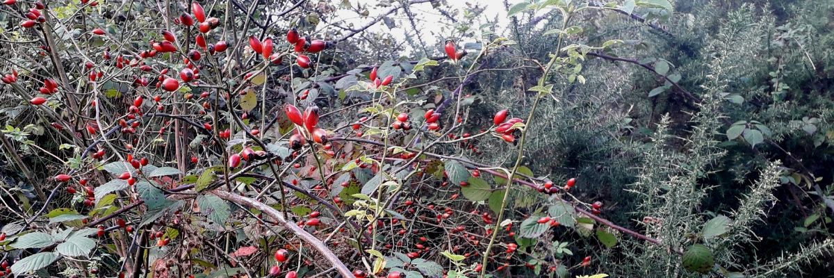 foraging-in-november-orchards-near-me