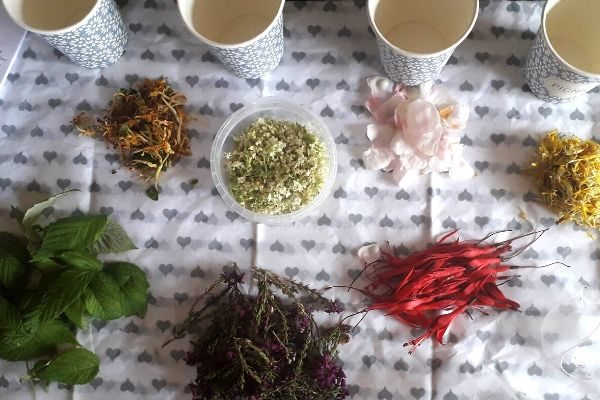 wild-herbal-tea-party-orchards-near-me