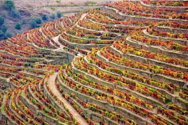 unique-food-tour-douro-valley-orchards-near-me