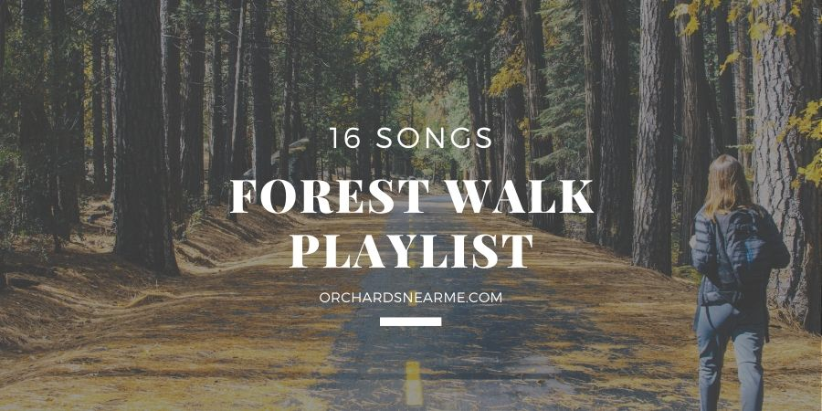 16-songs-forest-walk-playlist-outdoor-listening
