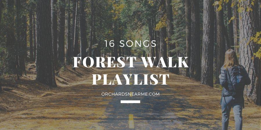 16-songs-forest-walk-playlist-outdoor-listening
