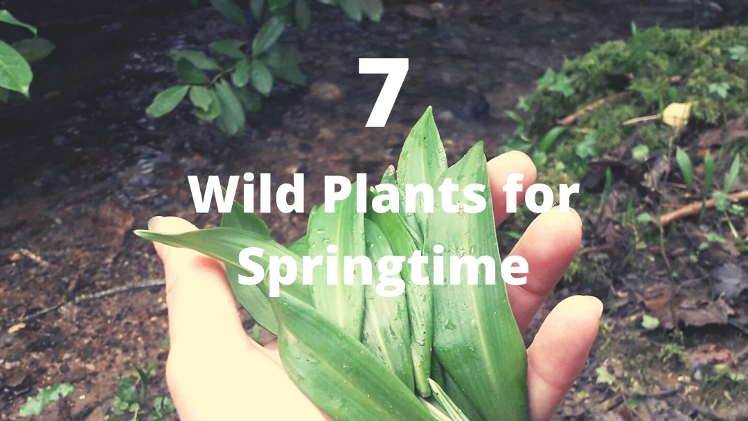 7-wild-plants-for-springtime-foraging-in-february