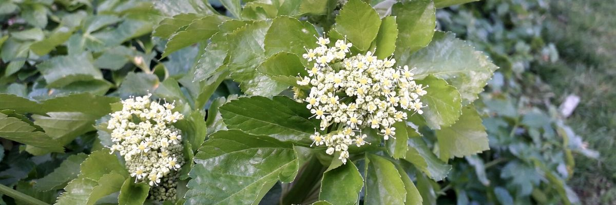 alexander-spring-rolls-wild-food-recip