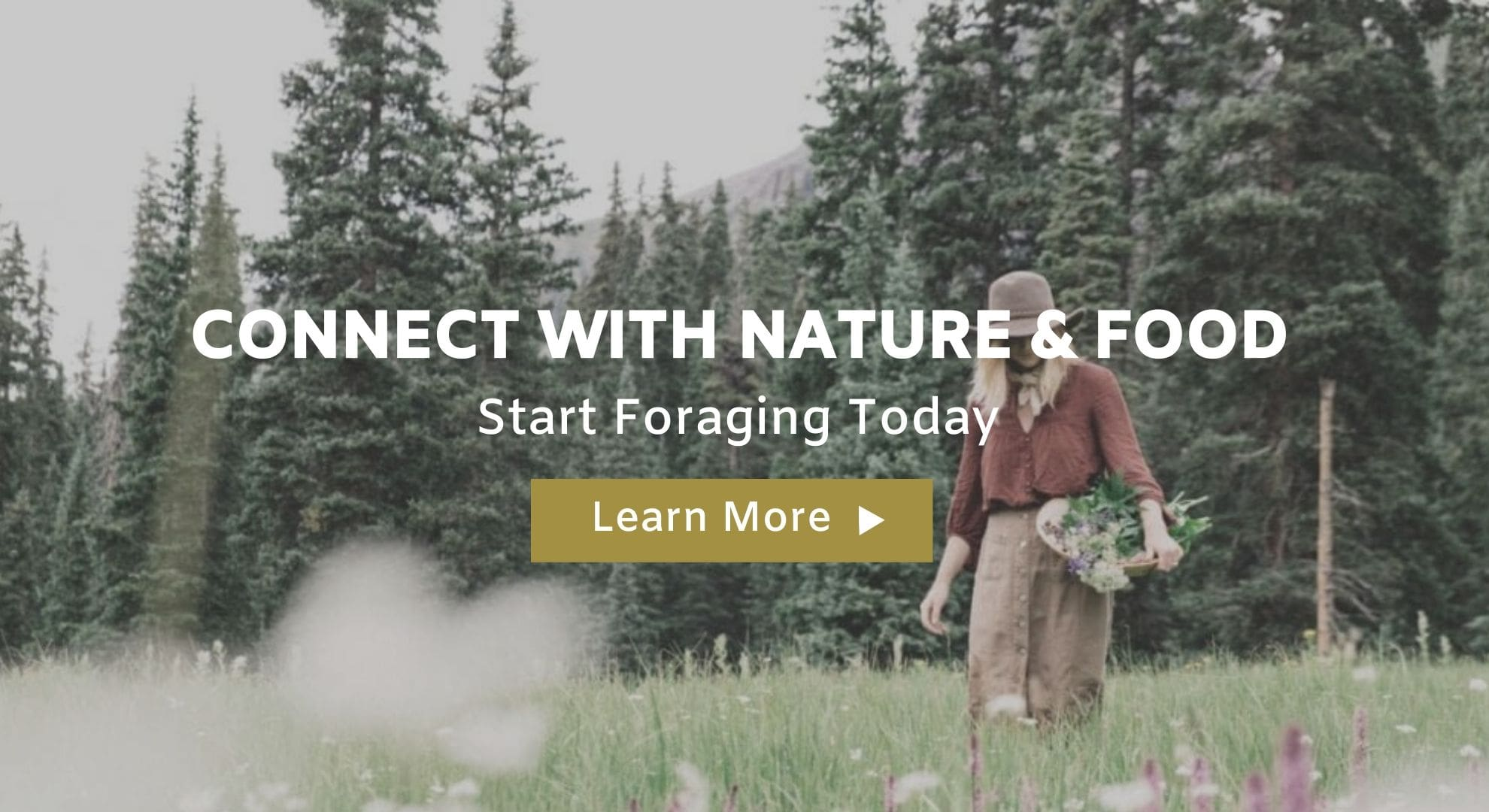 connect-with-nature-foraging-tours